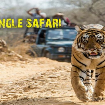 Kolhapur Hikers 🐾Wild Safari At Tadoba🐾 🐯The Land Of Tigers🐯